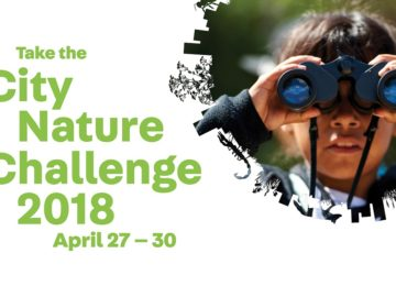 City_Nature_Challange_2018